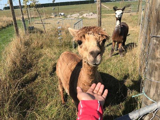 Timaru, Νέα Ζηλανδία: Famlan Farm Park