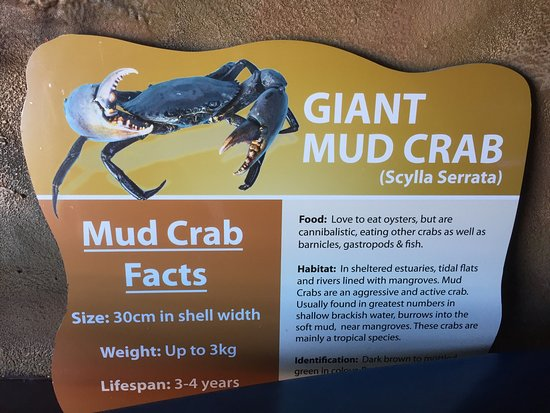 Tweed Heads, Australia: Guide and tour experience as part of Catch A Crab