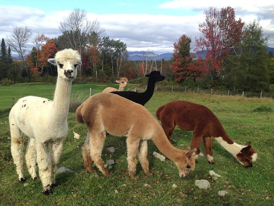 Whitefield, NH: Mountain View Farm