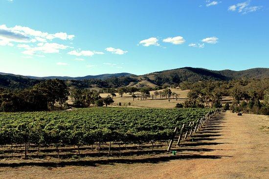 Wimmera Hills Winery vineyard in summer