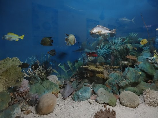 Seychelles Natural History Museum: Poissons