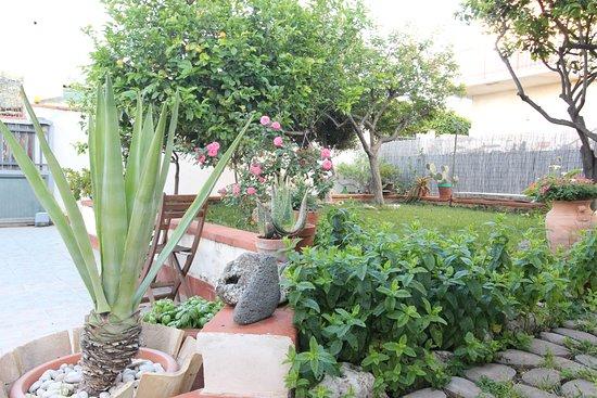 B&B San Leone: giardino