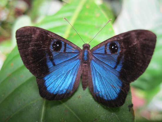 San Ramon, Costa Rica: Nectandra Mariposa