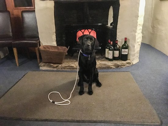 Tarr Steps, UK: Our dog warming himself by the fire in the restaurant