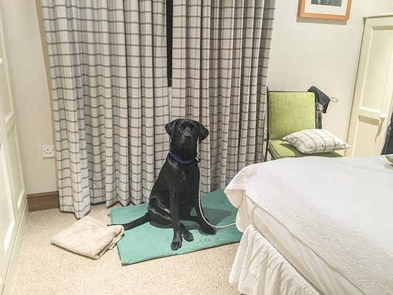 Tarr Steps, UK: Our dog getting comfy on his mat