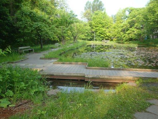 Hokkaido University Ono Pond