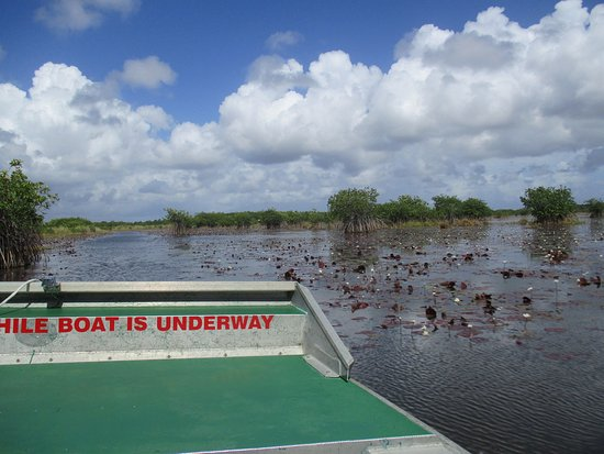 Chukka Caribbean Adventures in Belize: from the airboat