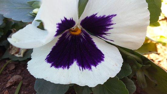 Algiers, Algeria: Les fleurs... crocodile  du jardin d'essai