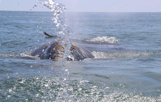 Ecoturismo Kuyima S.P.R. de R.L.: Whale comes to say hello