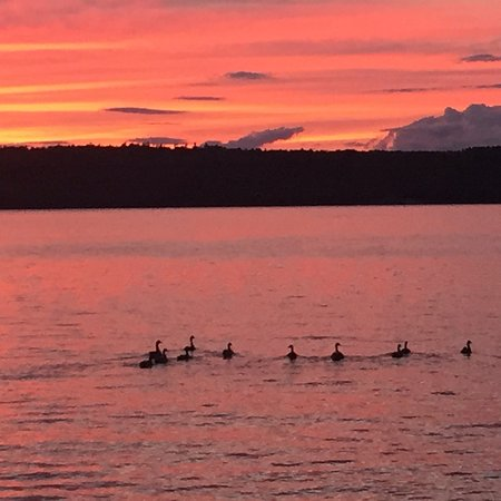 Oakland, ME: Canadian Geese heading into a beautiful sunset