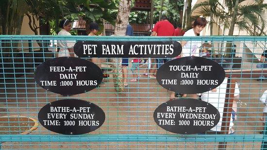 Avillion Port Dickson: Schedule for pet farm