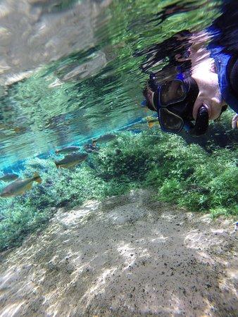 Recanto Ecológico Rio da Prata: Não movimente-se muito, os peixes chegam mais perto dessa forma