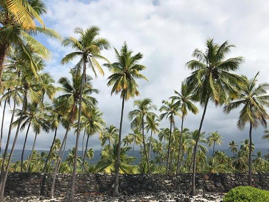 Honaunau, Hawaï: photo7.jpg