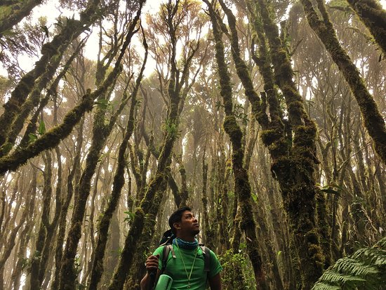 Mindanao, Filippinerne: Inside the world of mossy forest of Mount Talomo