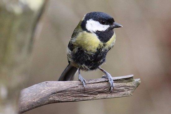Арундель, UK: In the bird garden