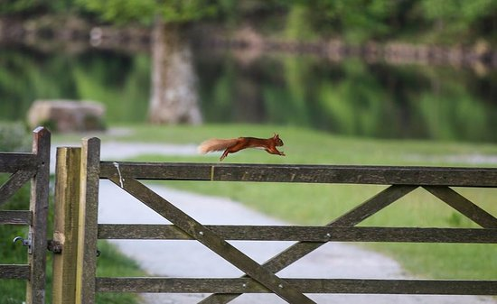 Newlands Valley, UK: Spot red squirrels not far from The Swinside Inn