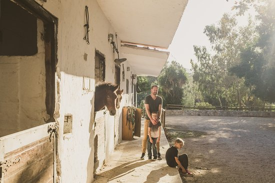 Deres Horse Riding Center: Back at the stables, no rush to head off so we hung out with the friendly horses for a while
