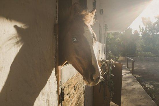 Deres Horse Riding Center: Beautiful blue eyed boy
