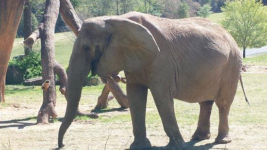 Asheboro, NC: Elephant!
