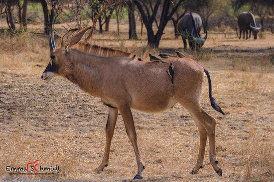 La Petite Cote, Senegal: Un avant-goût de safari.....