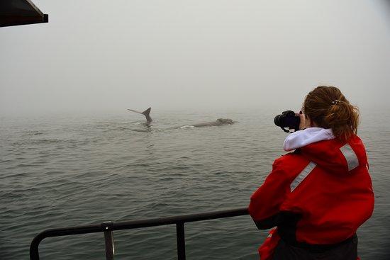 Сент-Эндрюс, Канада: Zodiac Jet Boat Whale Adventures, Right Whales!