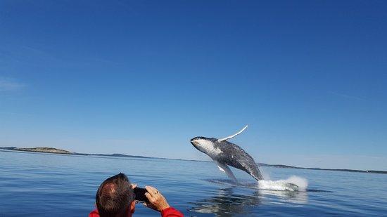 Saint Andrews, Canadá: Humpback breach!