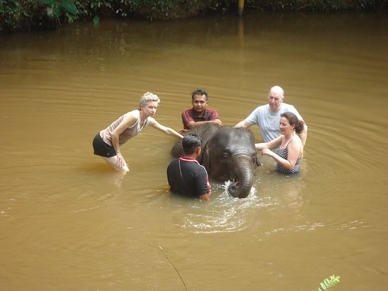 Pahang, Malaysia: in the river with a 4 year old elephant