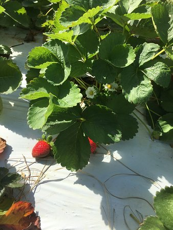 Knaus Berry Farm: photo2.jpg
