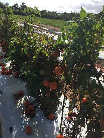 Knaus Berry Farm: photo4.jpg