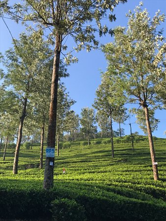 The Tall Trees Munnar: photo1.jpg