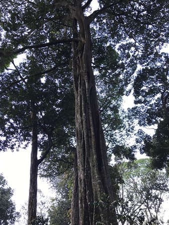 The Tall Trees Munnar: photo2.jpg