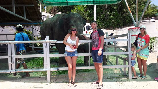 Chalong, Tajlandia: Семья слоников,где можно кормить и поить