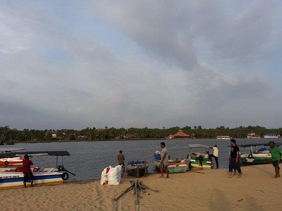 Estuary Island