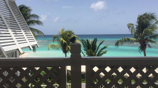 Worthing, Barbados: IMG-20160727-WA0006_large.jpg