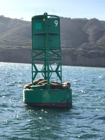 Fun Cat Sailing Catamaran Adventures: photo0.jpg