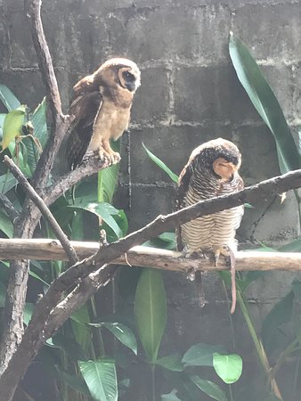 Perai, Малайзия: Penang Bird Park