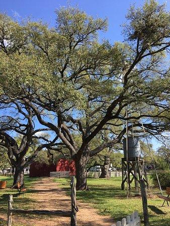 Johnson City, TX: photo5.jpg