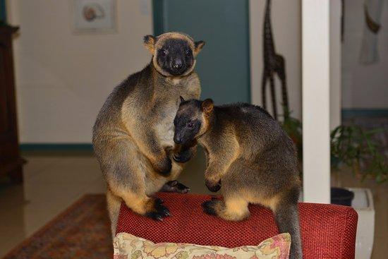 Atherton, Australia: Kimberly and Monty