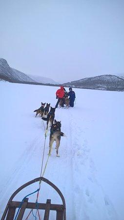 Ongajok Mountain Lodge: activité chiens de traineau