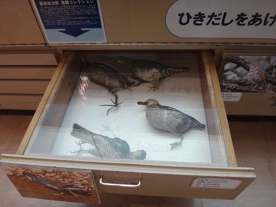 Kainan, Япония: 鳥の剥製…キャー!!