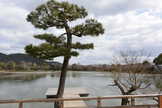 Osawaike Foto