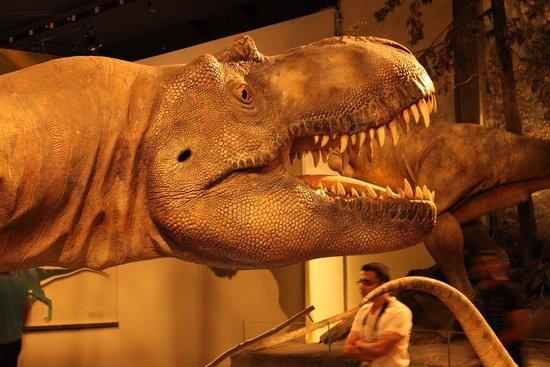 Museo Real de Tyrrell: photo0.jpg