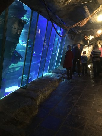 Portaferry, UK: Exploris Aquarium
