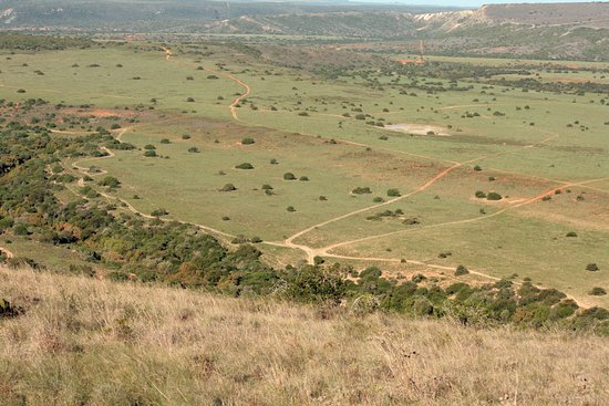 Amakhala Game Reserve, South Africa: Tour mit dem Jeep III