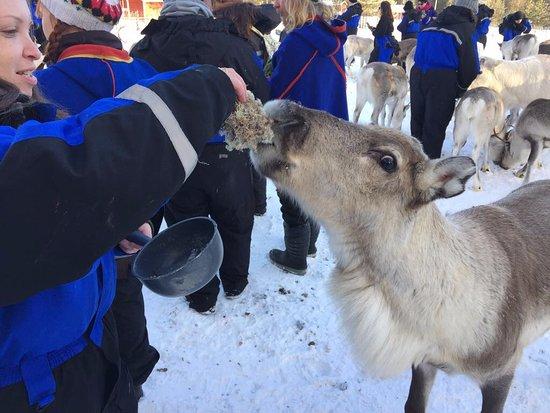 Luosto, Finlandia: Bon Appetit