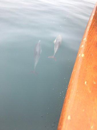 Newport Landing Whale Watching: photo1.jpg