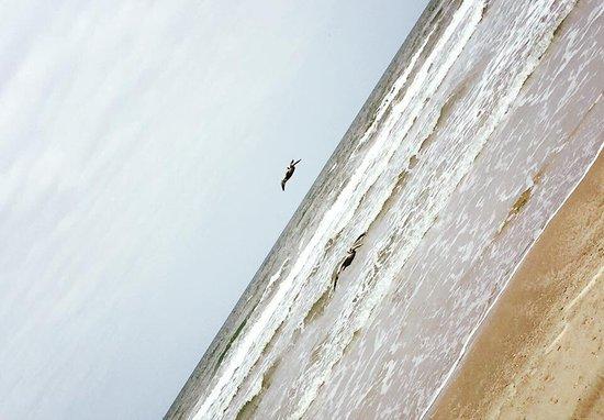 Padre Island National Seashore: photo2.jpg