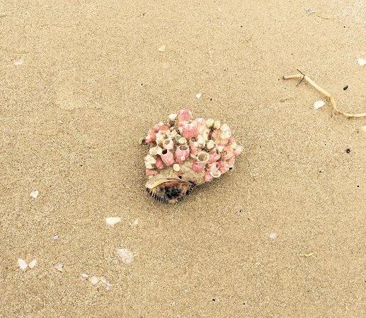 Padre Island National Seashore: photo3.jpg