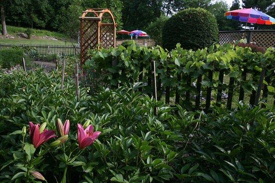 Fox Hill Bed & Breakfast: The Secret Garden