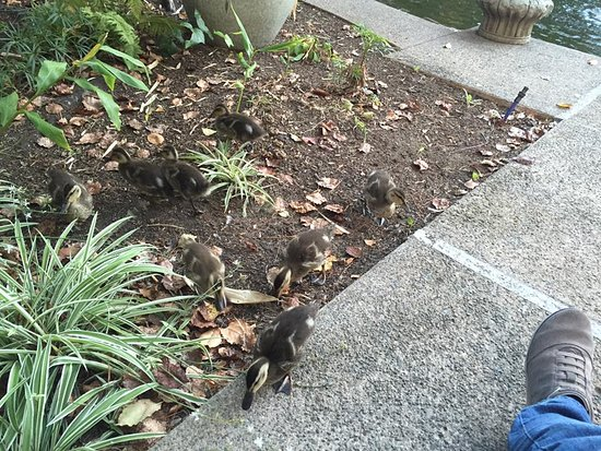 photo0jpg Picture of Dinahs Garden Hotel Palo Alto TripAdvisor